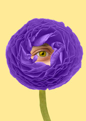 Live flowers. Nature looks and feels like a human. Big purple flower with male eye rounded in...
