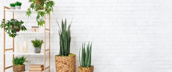 Photo sur cadre textile Vegetal Decorative home plants concept