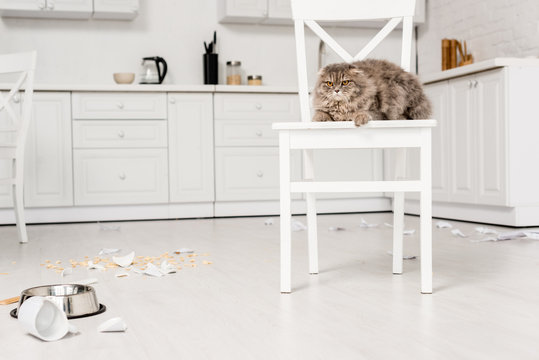 cute and grey cat lying on white chair and looking away in messy kitchen