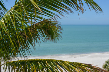 View of the tropical Florida Gulf Coast water with a palm tree in the foreground. This picture was taken on Longboat Key near St. Petersburg