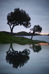 Olive trees reflected at dawn on the Costa Brava. Cadaques