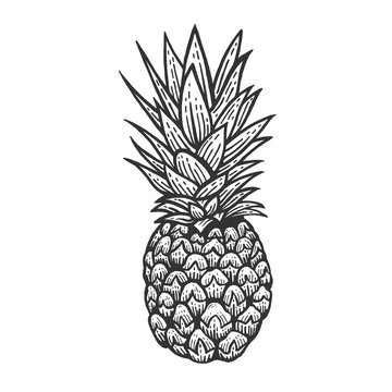 Pineapple exotic fruit sketch engraving vector illustration. Scratch board style imitation. Black and white hand drawn image.