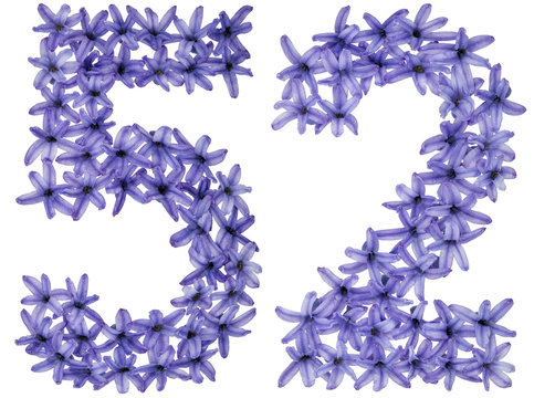 Numeral 52, fifty two, from natural flowers of hyacinth, isolated on white background