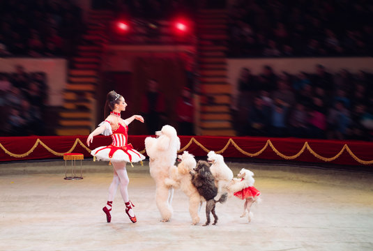 Dogs Performance  in the Circus.