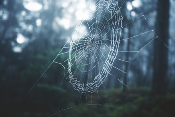 Spider cobweb in morning foggy forest landscape. Selective focus used.
