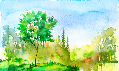 Watercolor painting, picture,  landscape - summer, autumn forest, nature, tree. Green, autumn, summer trees, fir, pine, yellow sun, blue sky. Green tree on a hill with grass, plants. Country landscape