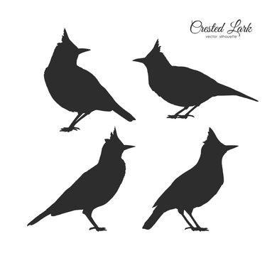 Set of four Silhouette of Crested Lark. Little birds on white background