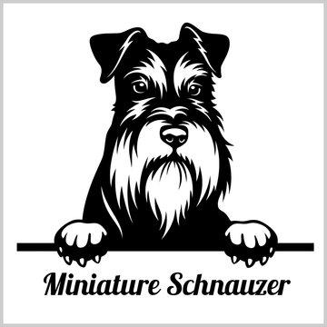 Miniature Schnauzer - Peeking Dogs - breed face head isolated on white