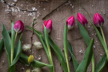 Aluminium Prints Tulip Tulp and blooming