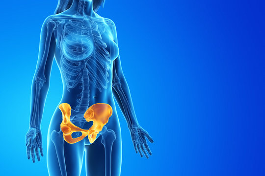 3d rendered medically accurate illustration of a womans hip