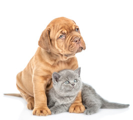 Mastiff puppy embracing kitten and looking away. isolated on white background