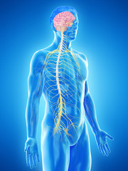 3d rendered medically accurate illustration of a mans nervous system