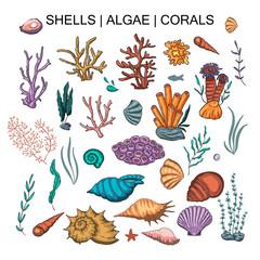 Algae, coral and shells big vector set.