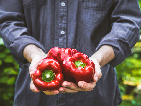 Farmer with red peppers