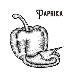 Paprika Hand drawing