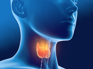 Thyroid gland of a woman, medically 3D illustration on blue background