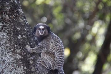 Macaco ao ar livre