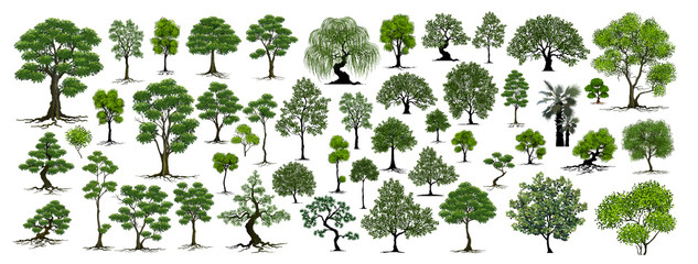 Trees Isolated on White Background Wall mural
