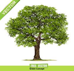 Obraz Trees Isolated on White Background - fototapety do salonu