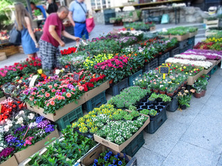 Kosice, Slovak Republic - May 2, 2018: Flower trade on the Dominican square in Kosice. Beautiful, bright, motley, different flowers in the boxes on the street and people blurred in the background