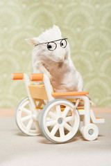 Close up of laboratory mouse sitting on wheelchair