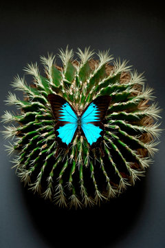 Overhead view of butterfly on cactus