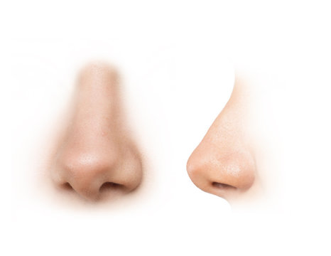 human nose reference images