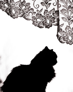 Silhouette of domestic cat against white background