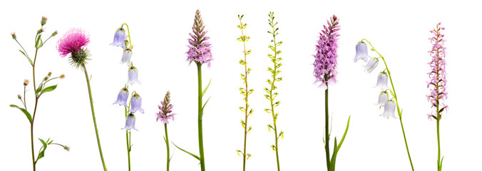 Variety of purple wildflowers arranged in a line