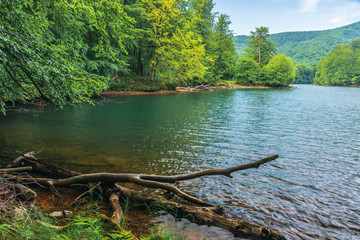lake among the beech forest. beautiful summer scenery in vihorlat mountains, slovakia. wonderful destination for a weekend vacation