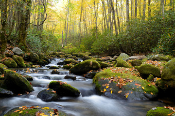 Small white water stream in the Smoky Mountains fall. Wall mural