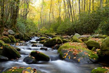 Fototapeta Small white water stream in the Smoky Mountains fall. obraz