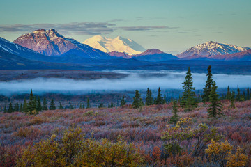 Foggy morning in Denali national park, Alaska