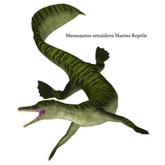 Mesosaurus Marine Reptile on White with Font - Mesosaurus was a carnivorous marine reptile that lived in the seas of Africa and South America during the Permian Period.