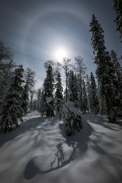 Sunlight in snowy forest