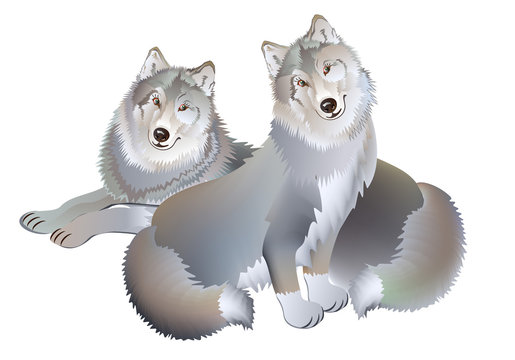 Fantasy drawing of couple of two wolves gentle loving each other. Modern print on white background. Illustration for baby book. Vector cartoon image.