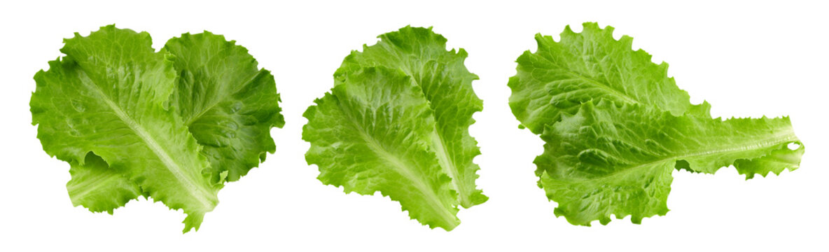 lettuce leaves Clipping Path