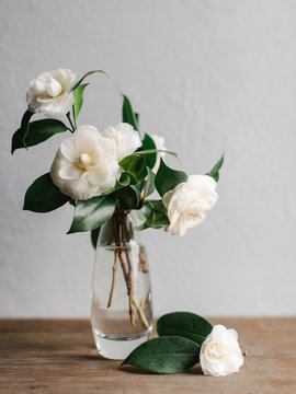White camellias in glass vase