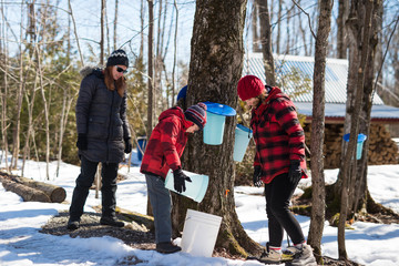 Family learns about maple syrup process in forest collecting sap from maple trees