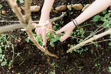 hands of your woman gardening