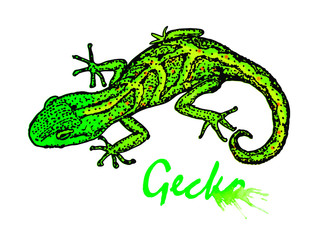 Gecko. Small green lizard. Gecko sketch with watercolor stains. Gecko logo design. Vector illustration isolated on white background.