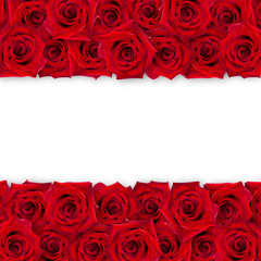 Background of red roses on a white background. The horizontal arrangement of the buds. Vintage style. Mock-up.