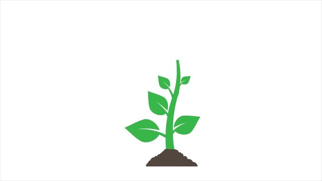 Growing Tree Animation Photos Royalty Free Images Graphics Vectors Videos Adobe Stock Cartoon tree powerpoint template is a free cartoon tree background for powerpoint presentations that you can download to make presentations using microsoft powerpoint. growing tree animation photos royalty