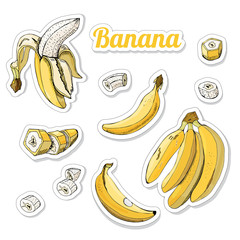 Color set with stickers of yellow bananas. Whole and sliced elemets isolated on white background. Hand drawn sketch.