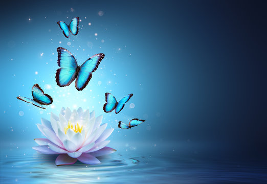 Butterflies And Waterlily In Water - Beauty Miracle