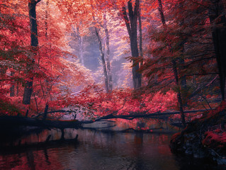 Canvas Prints Red The river in the dark thickets of the forest.