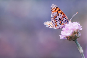 Dreamy romantic artistic image of spring nature with flower and butterfly on blurred background.