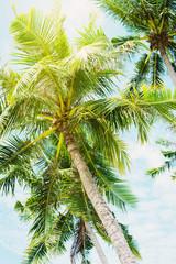 Palm Trees Jungle Blue Sky Landscape Tropical View