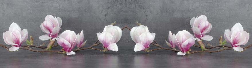 Wunderschöner blühender Magnolienzweig isoliert