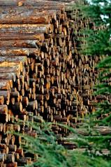 Zelfklevend Fotobehang Brandhout textuur pile of logs